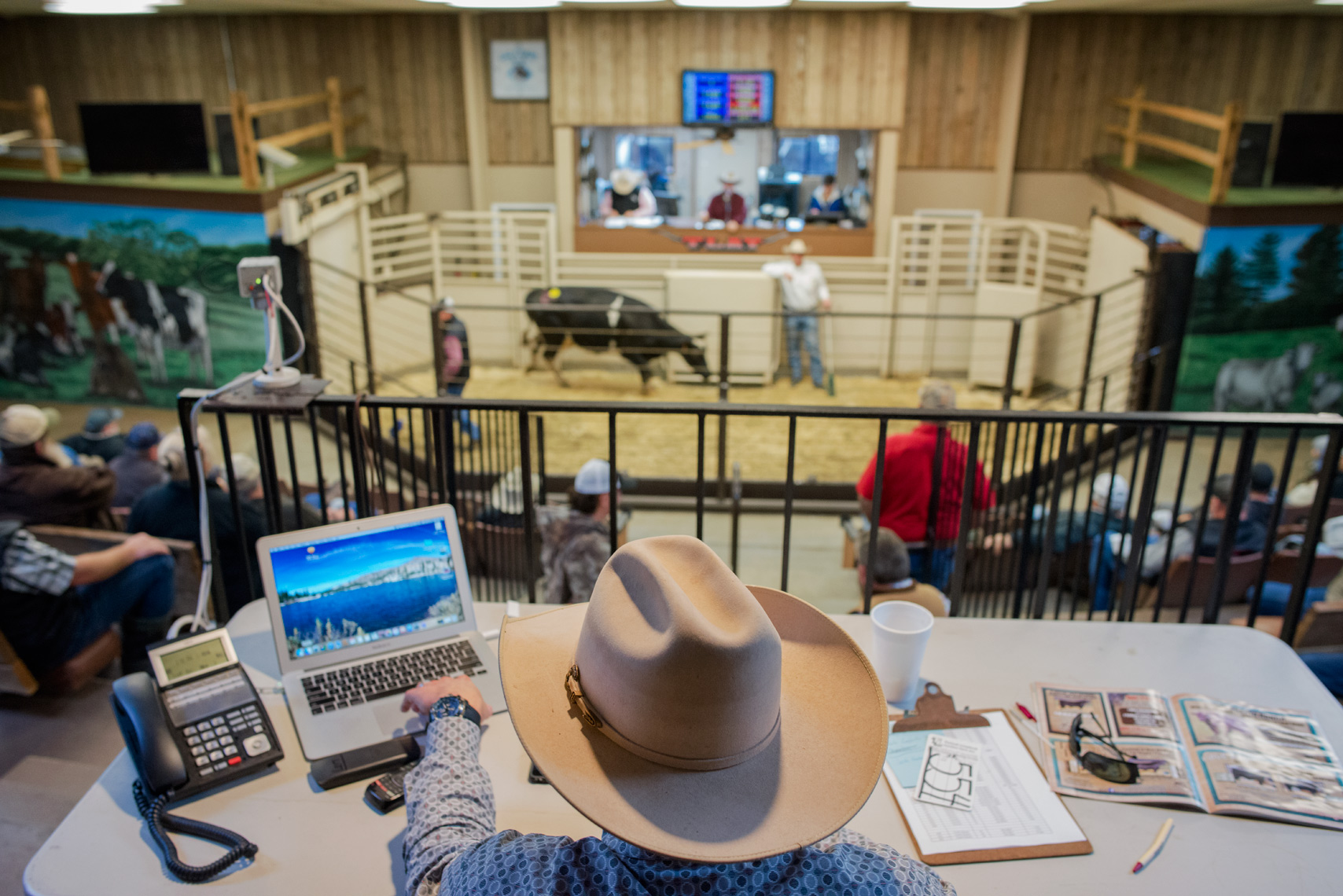 Cowboy at a cattle auction