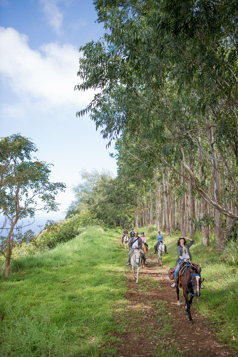 Touring Hawaii on horseback