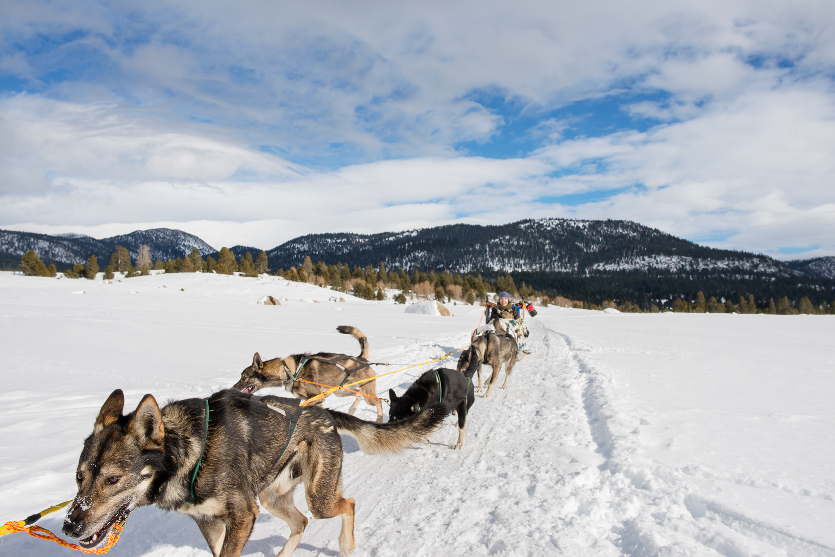 Dog sledding with Alaskan huskies